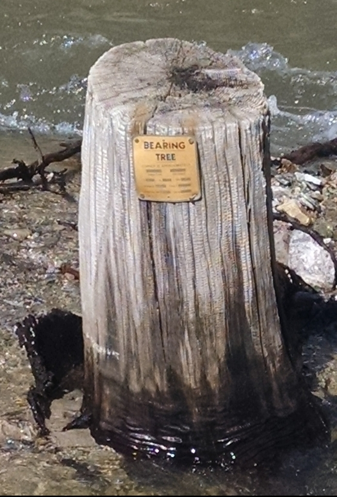 bearing tree marker on a stump in the water