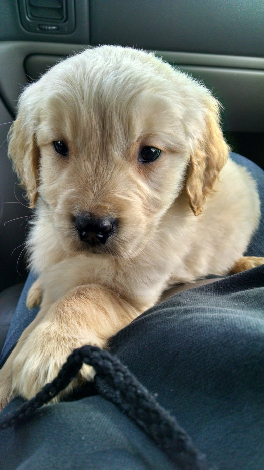 Brinkley as a puppy, the day I brought him home.