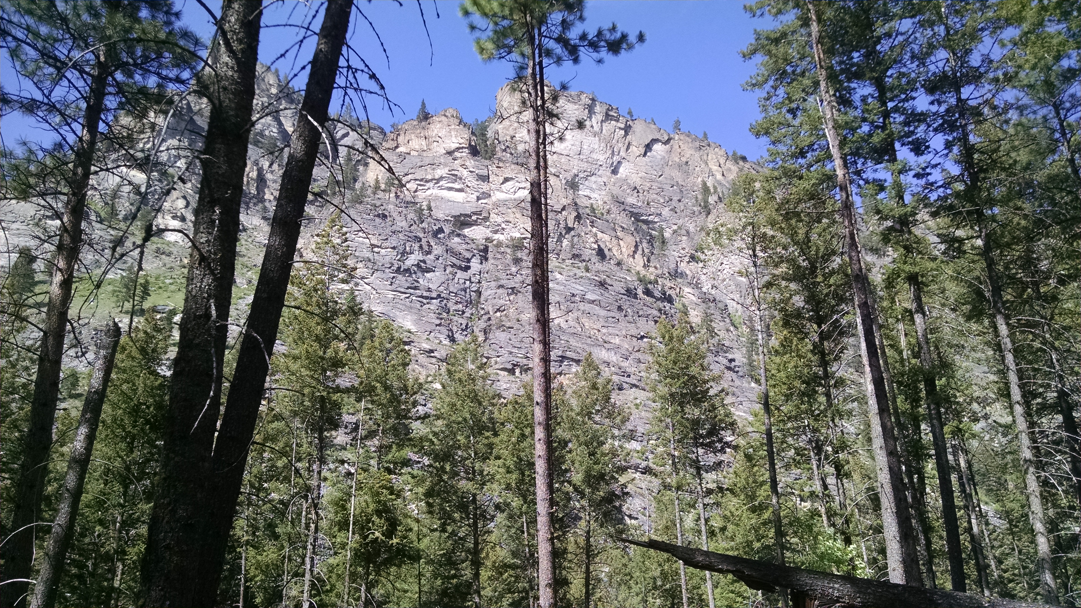Cliff face with Ponderosa pines in the foreground.  Blodgett Canyon, Montana.  (Photo: Theresa Duncan)