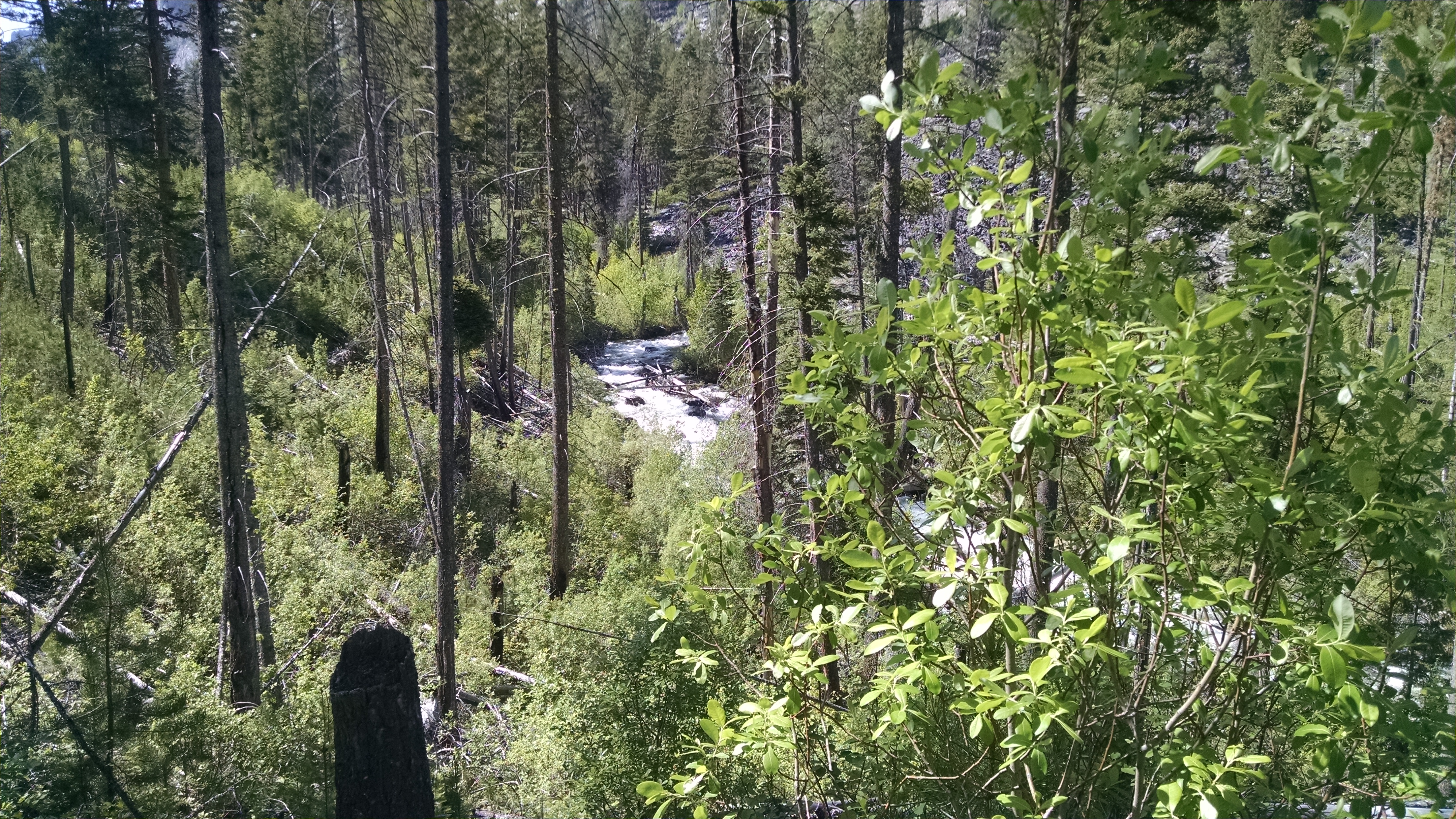 Blodgett Creek, Montana.  (Photo:  Theresa Duncan)
