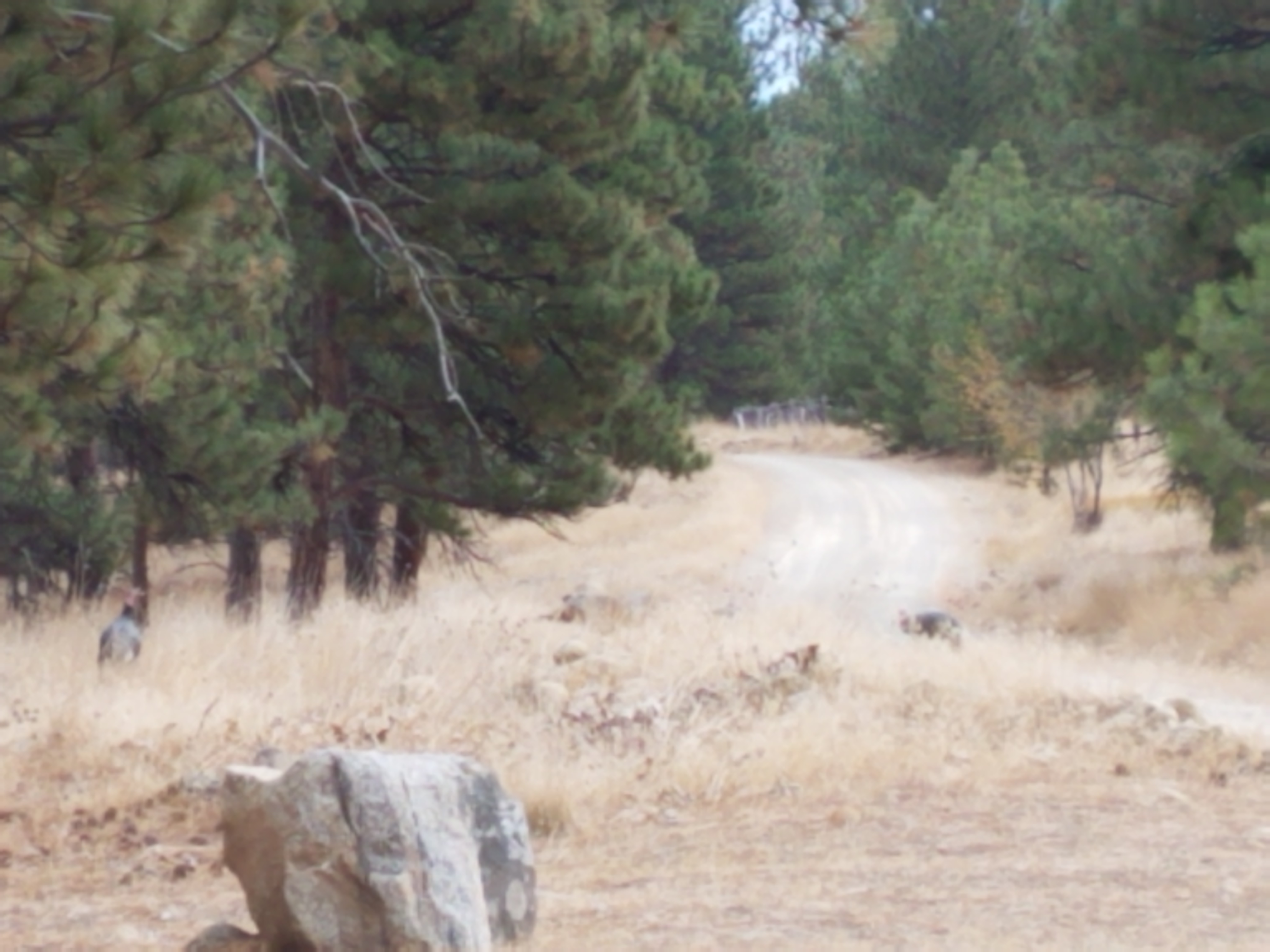 A rock seat, looks down a winding dirt road.  Photo:  Theresa Duncan