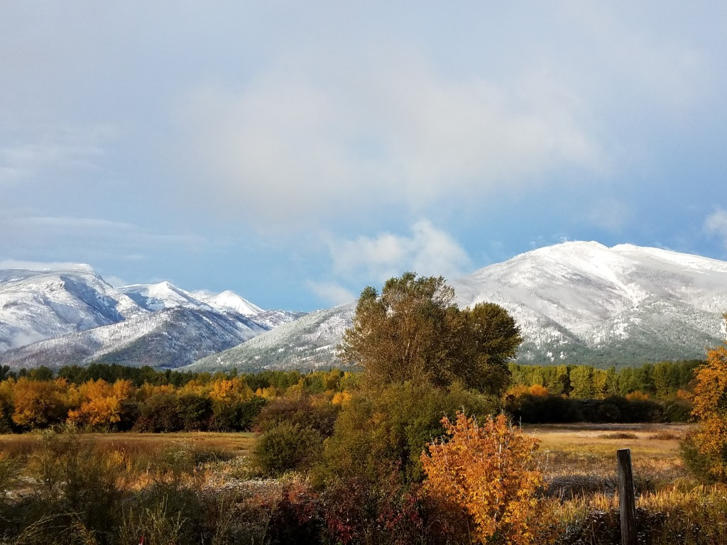 Snow-covered Bitterroot Mountains with deciduous trees changing colors in the foreground.  (c. T Duncan 2017)